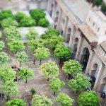 オレンジの庭 ヒラルダの塔 – Patio de los Naranjos, Catedral Giralda