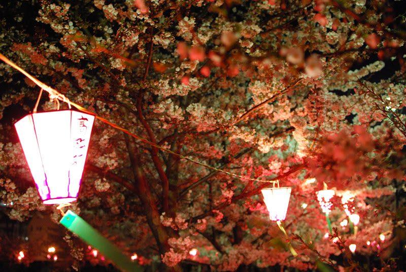 高松城跡 玉藻公園で夜桜のライトアップ – Night cherry blossoms of Takamatsu Castle