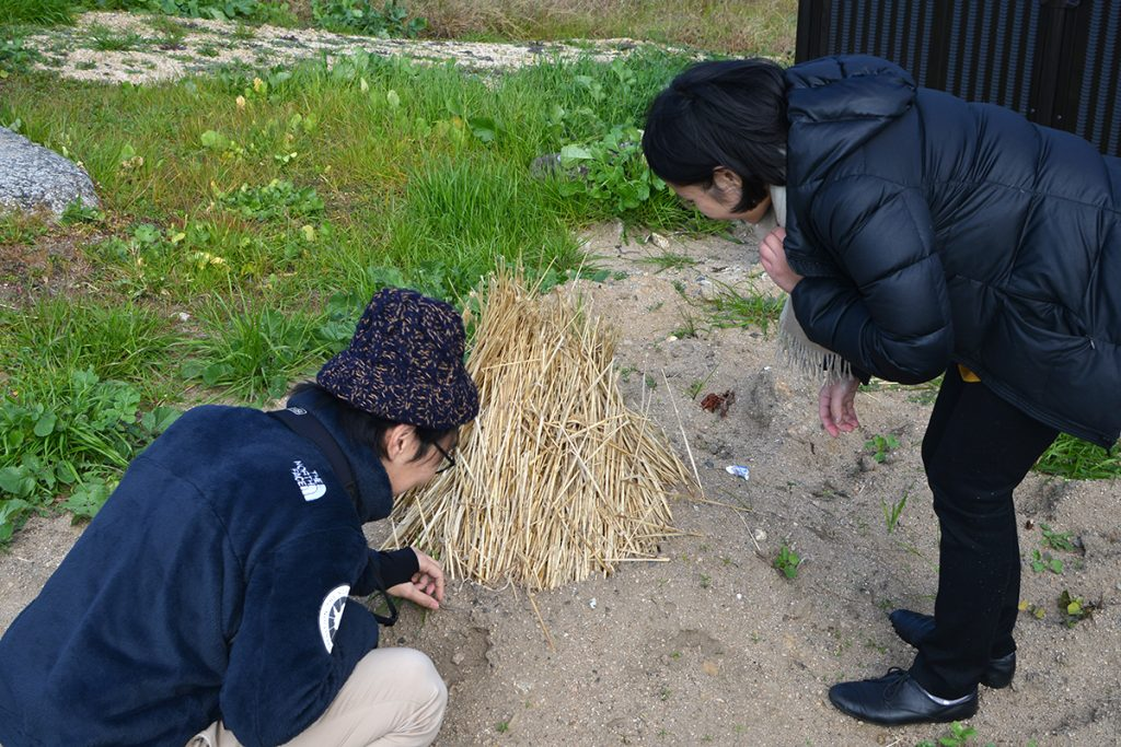 小豆島土庄町伊喜末(いぎすえ)地区に伝わる独特のサツマイモ保存方法。小豆島、冬の風物詩のひとつ「つぼいけ」