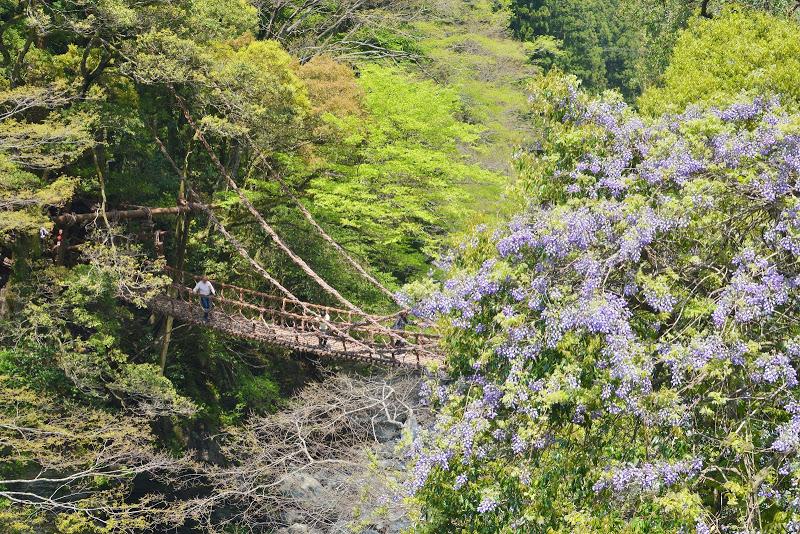 【日本三奇橋・国指定重要有形民俗文化財】祖谷のかずら橋  Iya Vine Bridge