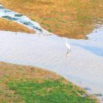 世界最速の増殖能力をもつスーパー珪藻。高松の干潟で発見!