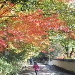 紅葉の季節、ここもオススメ。来たことのある 初めての場所「四国村」
