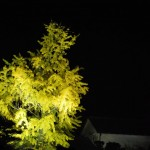 栗林公園(りつりんこうえん)の銀杏が美しい The Ritsurin Garden's yellow beauty of a ginkgo tree.