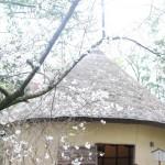 かつて讃岐平野は白糖の生産が日本一でした。砂糖の〆小屋 – The Sugar Mill