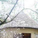 かつて讃岐平野は白糖の生産が日本一でした。砂糖の〆小屋 The Sugar Mills at Kagawa pref.