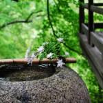 雨に濡れた臥龍山荘(がりゅうさんそう) – Garyu Sanso, mountain villa