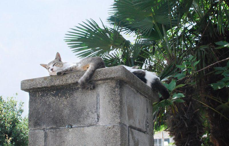 猫まとめ – Cats' photo