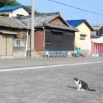 猫の楽園、佐柳島(さなぎしま)へ – The cats' paradise Sanagi island.