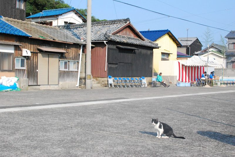 猫の楽園、佐柳島(さなぎしま)へ The cats' paradise Sanagi island.