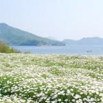 浦島伝説が残る荘内半島の花畑、フラワーパーク浦島 Flower park Urashima