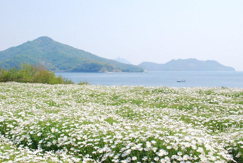浦島伝説が残る荘内半島の花畑、フラワーパーク浦島 – Flower park Urashima
