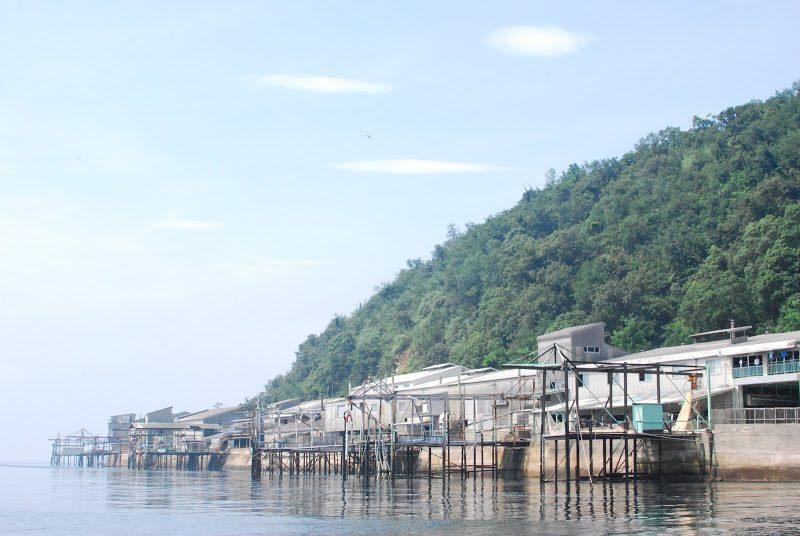 【伊吹島】讃岐うどんに欠かせない伊吹島の「いりこ漁」 – The Ibuki island is famous for dry sardins.