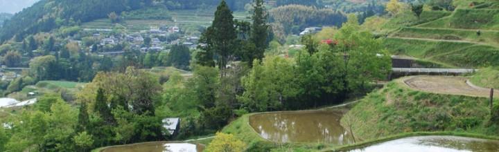 【全国大会日本一!】高知県本山町の天空の棚田米 Motoyama, terraced rice fields