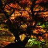 【11月19日(土)~28日(月)】 大名庭園 栗林公園 秋のライトアップ The autumn colors lighting-up at Ritsurin Garden
