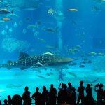 水族館アクリルパネル世界シェア1位は香川県の会社「日プラ」
