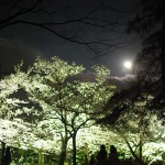 栗林公園、春のライトアップ Nighttime event of Cherry blossoms in Ritsurin Garden