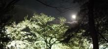 【写真レポート】栗林公園、春のライトアップ Nighttime event of Cherry blossoms in Ritsurin Garden