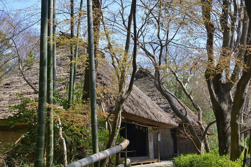 登録有形文化、四国村・久米通賢邸で料理 cooking at traditional Japanese house