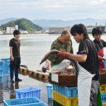 徳島の活鱧(いきはも)「徳島魚類有限会社」