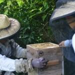 養蜂家 長生さんに会いに日本一細い半島、佐田岬へ