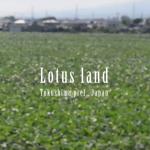徳島県鳴門市のレンコン畑 Lotus land of Tokushima pref., Japan