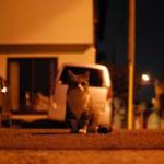 月光浴 – cat in the moonbath