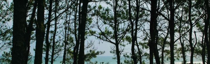 高知県の建物のない美術館「砂浜美術館」 – Sunahama (Sandy beach) museum, Kochi pref.