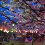 高松城跡 玉藻公園で夜桜のライトアップ