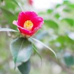 春を届ける仕事 – work of delivering the spring