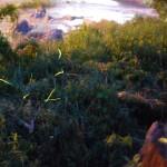 塩江温泉郷までホタルを見に行ってきました。しおのえホタルまつり