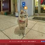 世界初!猫目線のストリートビューが広島・尾道で開始!
