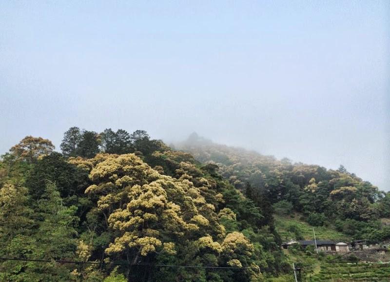 【今日のあるく•みる•きく】  高知県四万十町地吉の周辺を歩いています