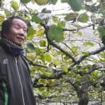 枝の観察で生まれた高糖度のキウイ、香川県善通寺市「キウイバード」