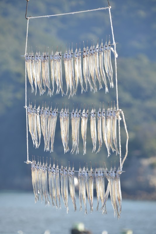 鞆(とも)冬の名物、サヨリの天日干し。Winter feature of Tomonoura, dried fish in the sun