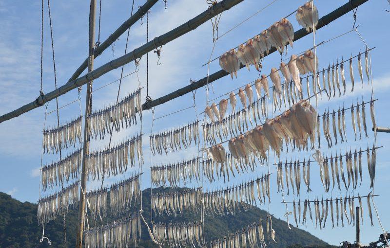 鞆(とも)冬の名物、サヨリの天日干し。Winter feature of Tomonoura, dried fish in the sun