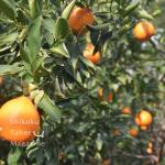 四国食べる通信2月号 写真集