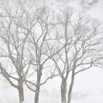 白銀の錦秋湖。岩手県西和賀町