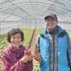 """なると金時の木内農園 Sweet potato """"Naruto Kintoki"""" of Kinouchi farm at Naruto, Tokushima pref."""