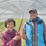 "なると金時の木内農園 Sweet potato ""Naruto Kintoki"" of Kinouchi farm at Naruto, Tokushima pref."