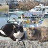 フランス人観光客が訪れる瀬戸内の島、真鍋島 Manabeshima Island Japan