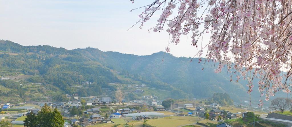 Panorama_sanagochi_03_sakura
