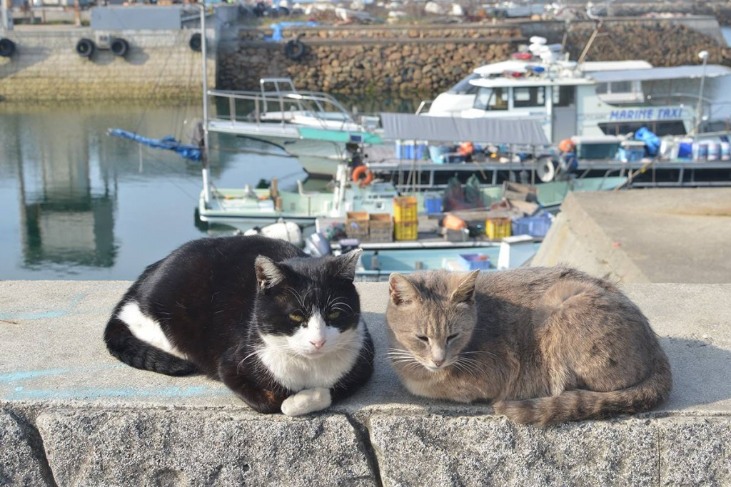 cat manabe island 02