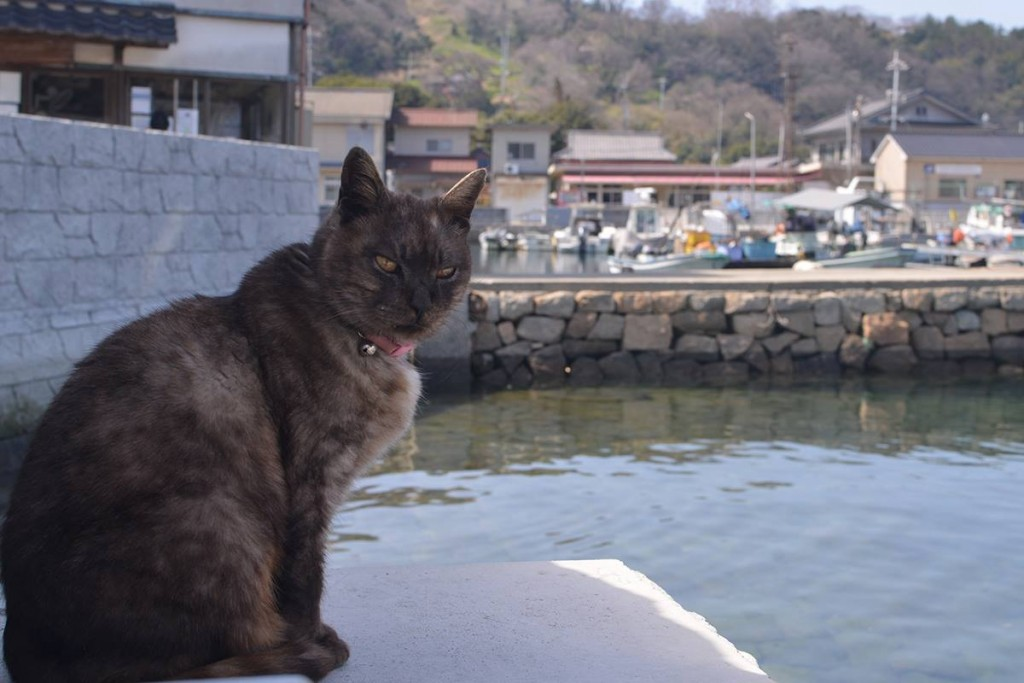 cat manabe island 06