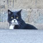真鍋島の猫たち Cats of Manabe island