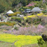 【徳島】神山町江田、棚田に菜の花の黄色い絨毯 – [Tokushima] The beautiful field mustard at Kamiyama