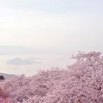 紫雲出山から見る瀬戸内海の島々と桜 The view to Islands of Seto Inland Dea from Mt. Shiude