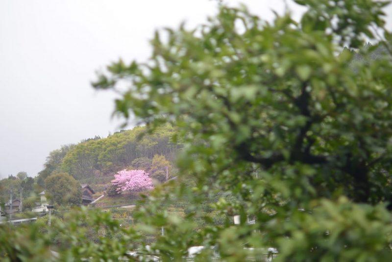 高松と佐那河内村の二拠点生活