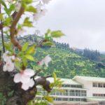 国の重要文化財の木造小学校『八幡浜市立日土小学校』 – The Hizuchi Elementary School in Ehime pref.