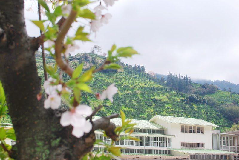 国の重要文化財の木造小学校「八幡浜市立日土小学校」 The Hizuchi Elementary School in Ehime pref.