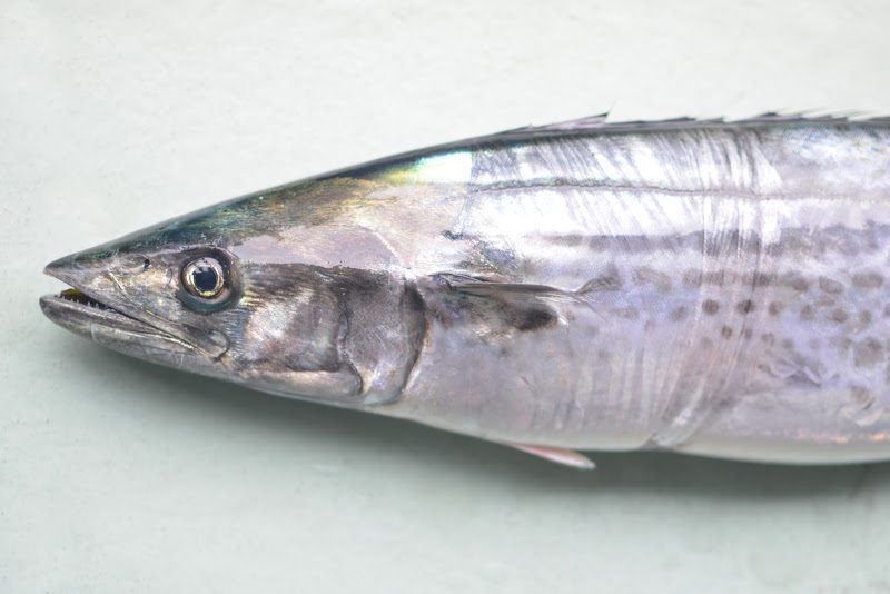 春を告げる鰆(さわら)の初競り Japanese spanish mackerel is heralding the start of spring.